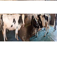Singla Dairy Farm Contact Information, Main Office Number, Email ID